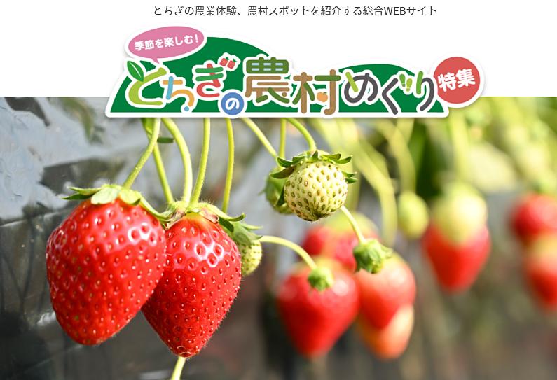 こんなサイトあるの知ってました(゚Д゚;)?【とちぎの農業を楽しむ総合WEBサイト】