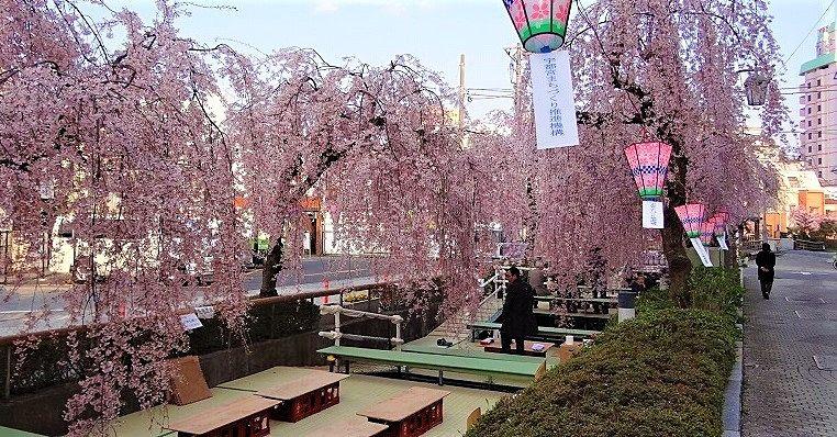 令和3年【かまがわ川床桜まつり】規模縮小にて開催☆