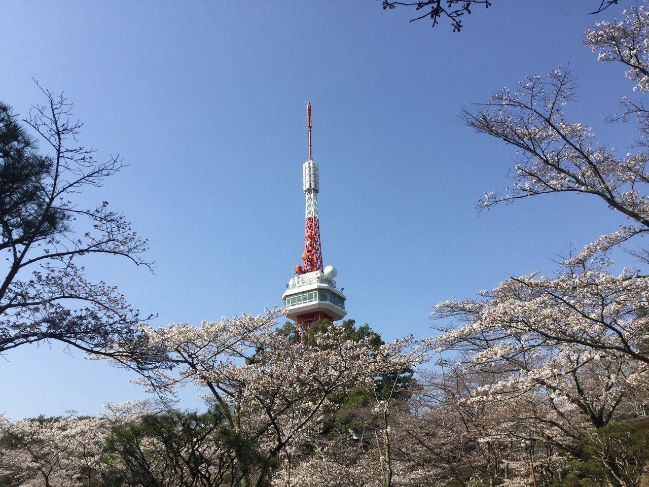 宇都宮八幡山公園 桜 宇都宮タワー