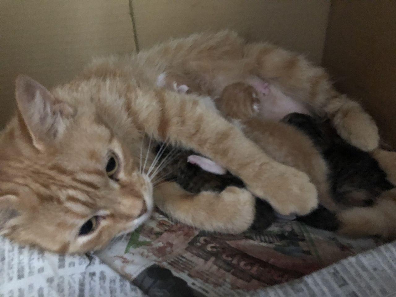 猫授乳 猫出産